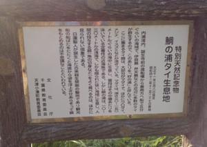 Tainoura